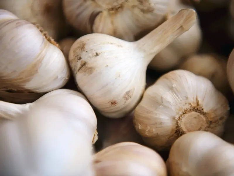 Marinelli uses fresh local garlic