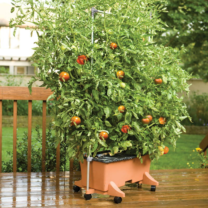 5 foot EarthBox staking system supporting tomatoes growing in an EarthBox Original container
