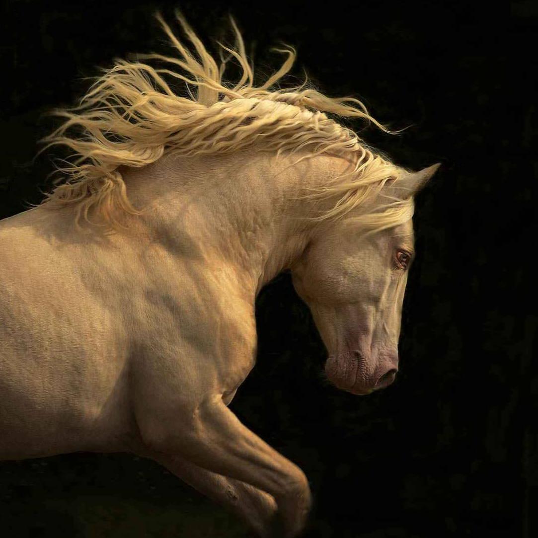 Tony Stromberg. Fine Art Photography. Equine Art. Sorrel Sky Gallery. Santa Fe Art Gallery.