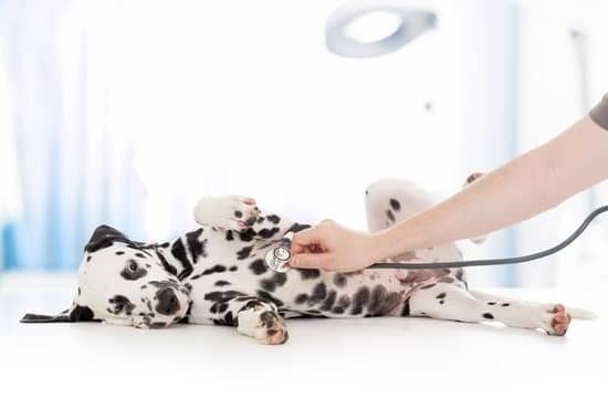 a Dalmatian puppy laying on its side as a doctor checks their heart