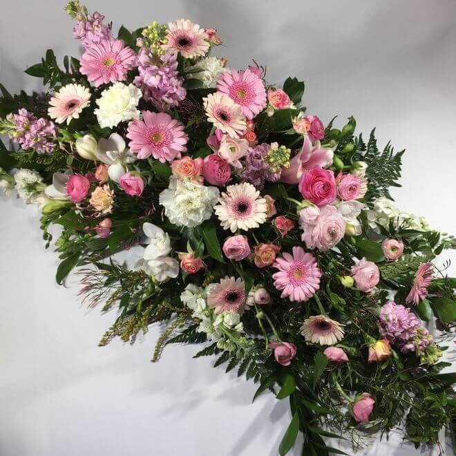 Coffin flowers, large and bright in Porirua
