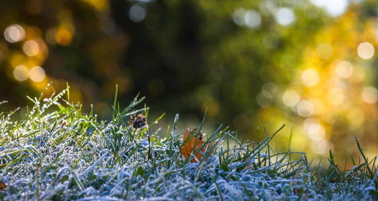 Calendrier des tontes de la pelouse