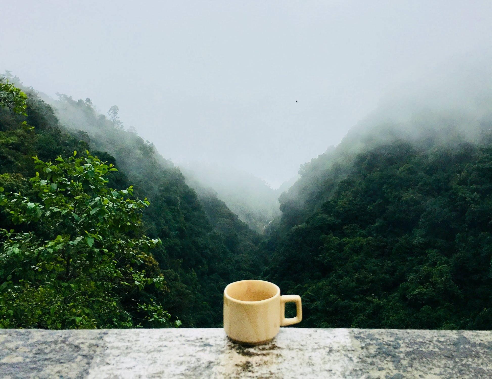 Tea Cup On A Ledge With A Jungle Backdrop