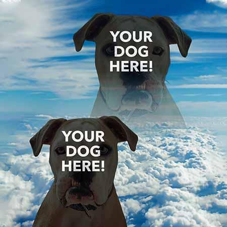 Super Portrait of pitbull in the sky
