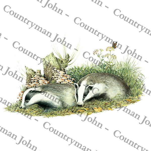 Countryman John Badger Cub Artwork - 1403