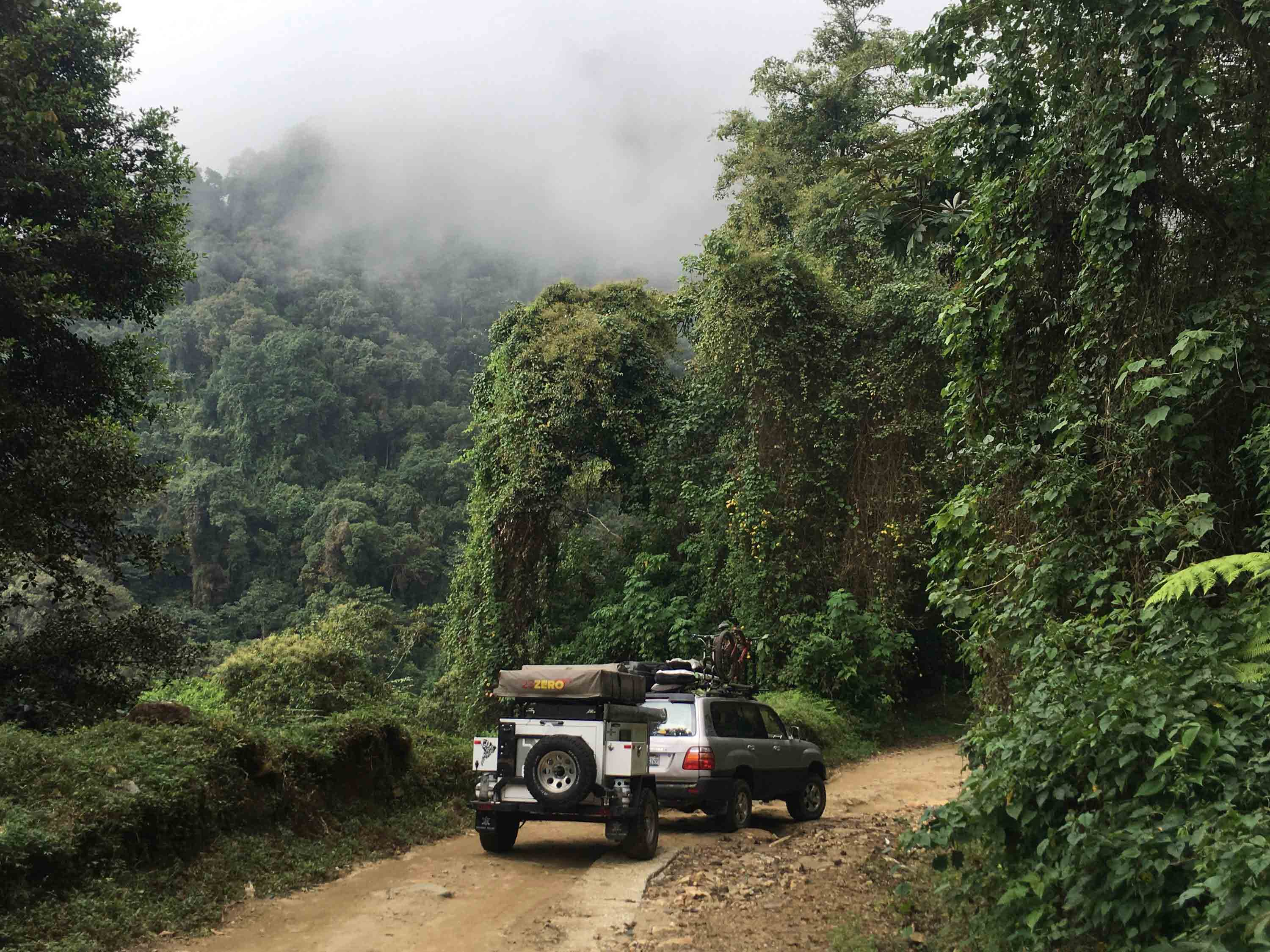 Driving through a dense jungle on a dirt path