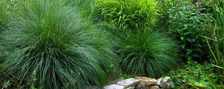 Siergrassen: een speels tafereel in de tuin