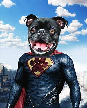 dog in superman costumes
