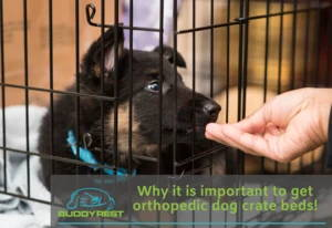 why is it important to get orthopedic dog crate beds