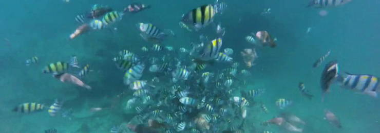 Crystal waters and incredible scenery when snorkeling in Koh Phi Phi
