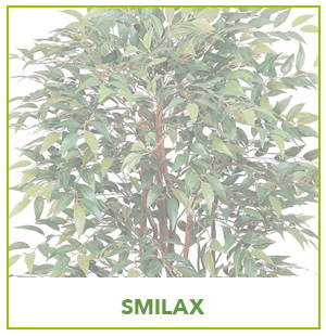 ARTIFICIAL SMILAX PLANTS