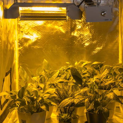 House plants growing under a grow light in a grow tent.