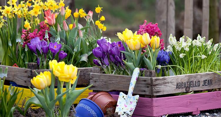 Desiderio di primavera
