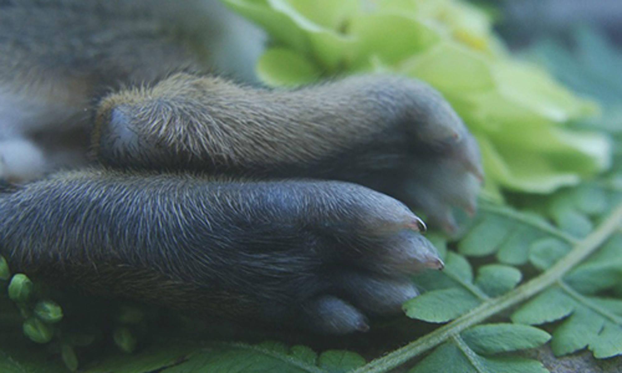 your bunny feet