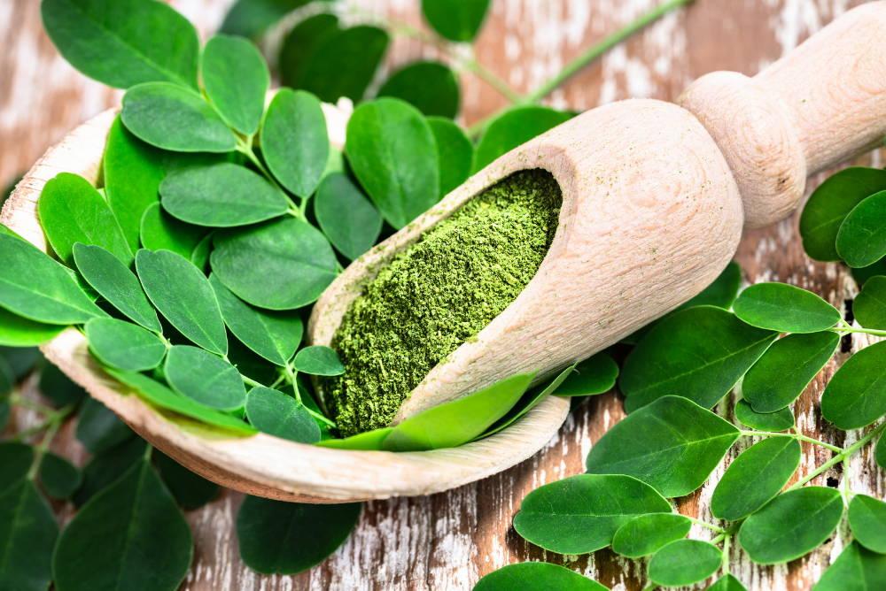 Moringa powder in wooden scoop with original fresh Moringa leaves on wooden table close-up.health benefits of moringa|main image|sunwarrior blog