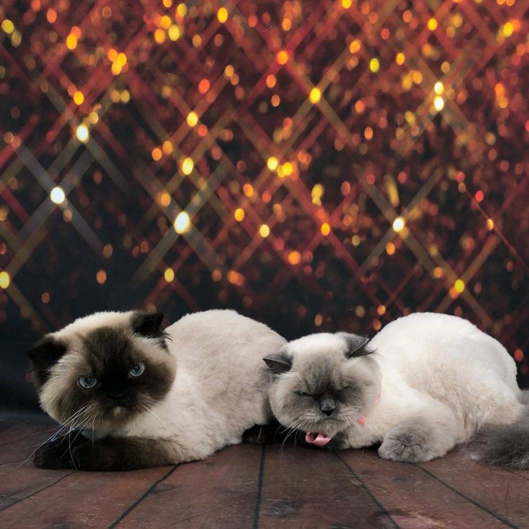 Pawpy Kisses Pet Grooming photo dec 14