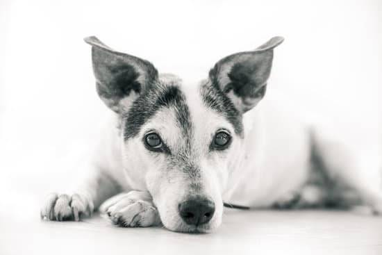 A dog laying down looking at the camera. The photo is in black and white.