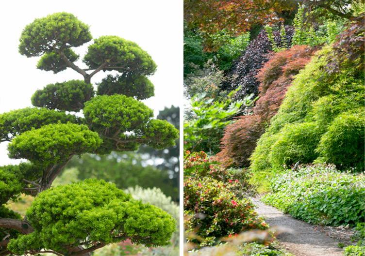 Japanse tuin en planten