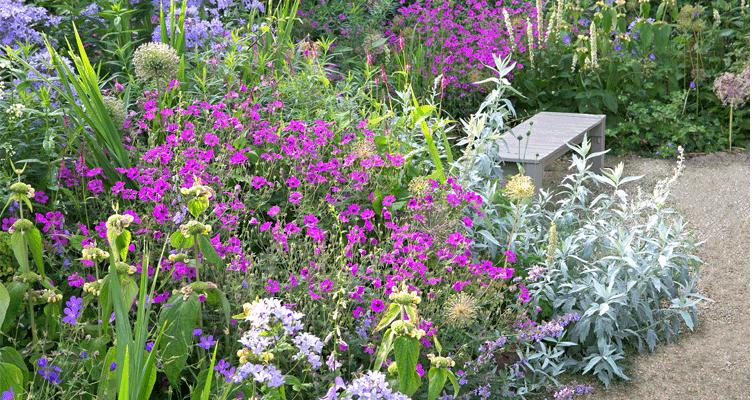 De truc van mooie en volle planten