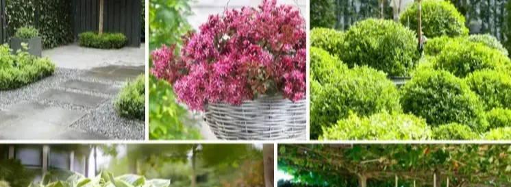 Der pflegefreie Garten