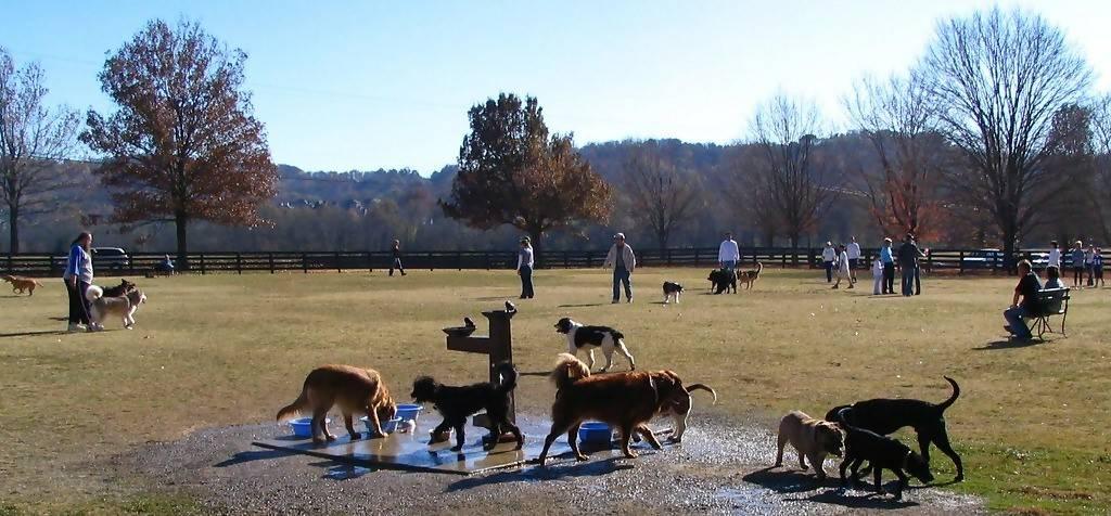 A dog club gathering at a local dog park