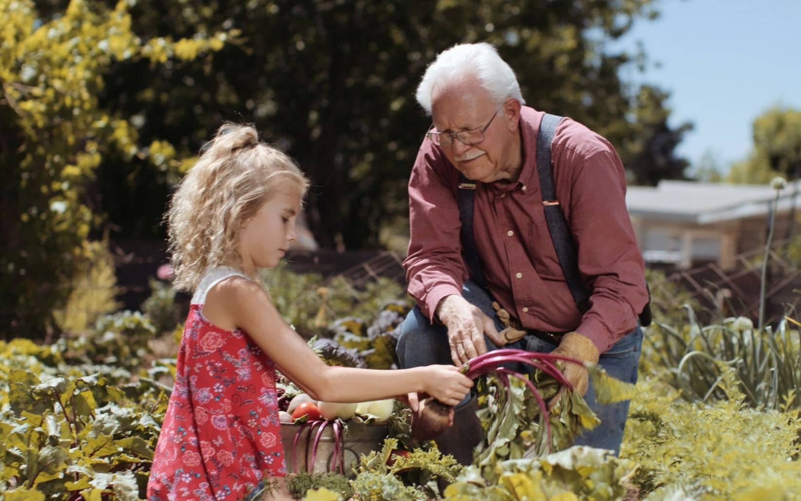 Grandpa and grand daughter in garden|Vegan-collagen-osteoporosis