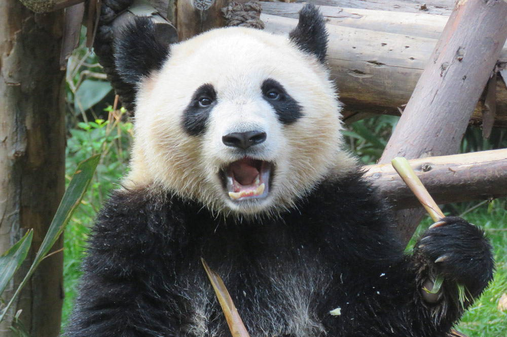 Travelbay China Tours - Customer Reviews - Chengdu