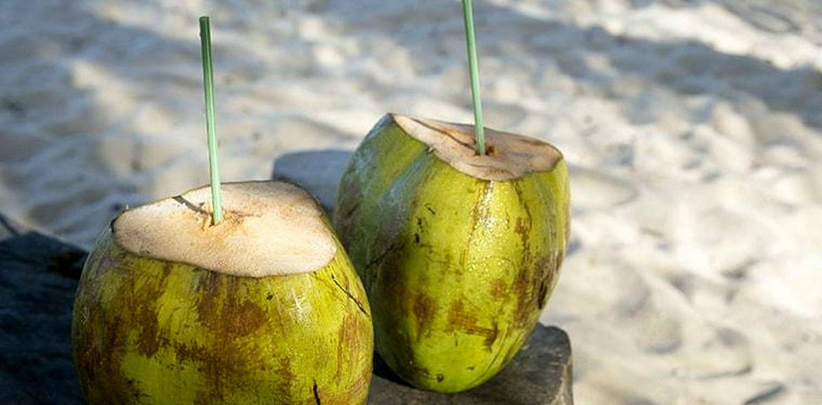 Two green coco gelado drinking coconuts stand on rustic wood table | Healing Wonders Of Coconuts | Benefits Of Coconut | plant-based protein