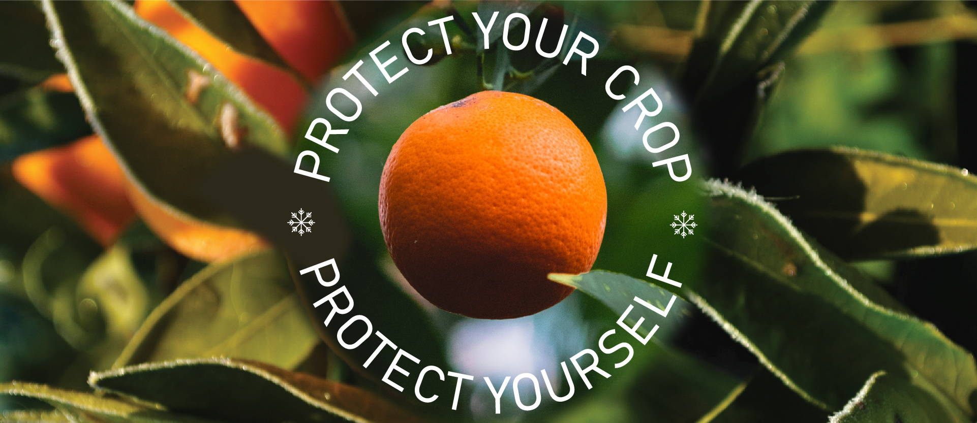 Protect your crop.  Protect yourself.