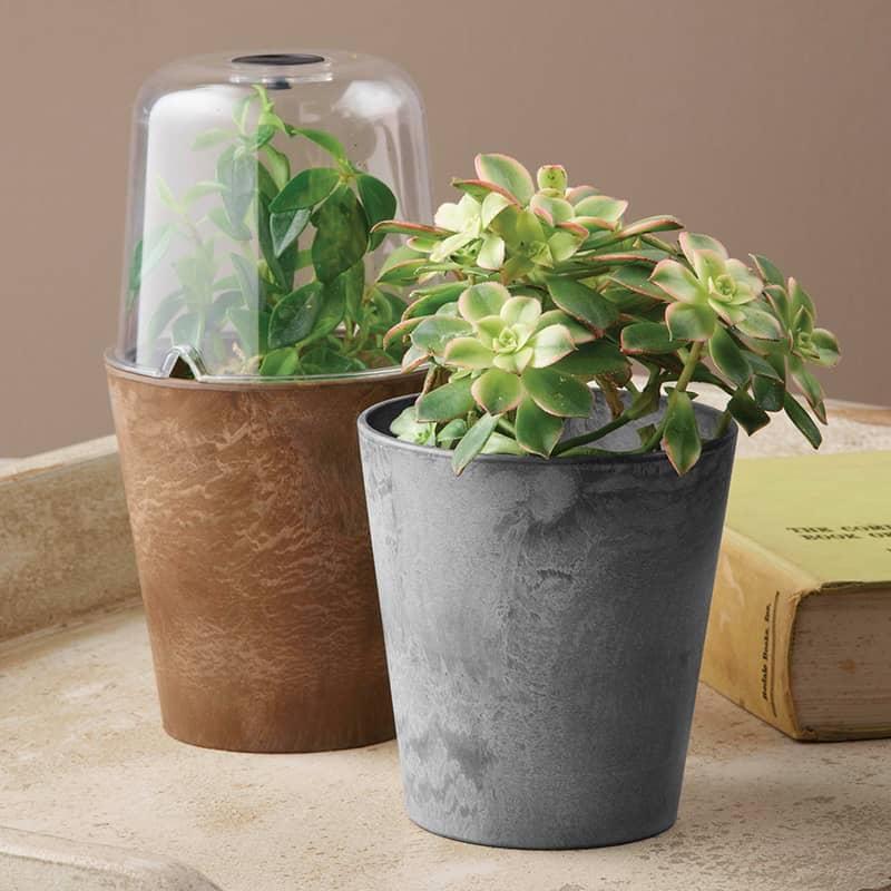 Cache Pot Terrarium