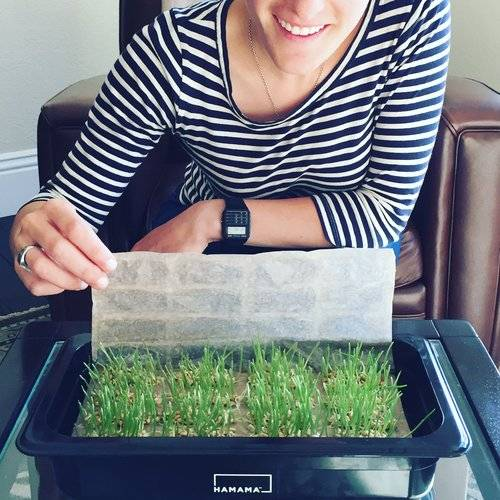 Woman peeling the cover of a Seed Quilt revealing wheatgrass growing in a HAMAMA grow kit.