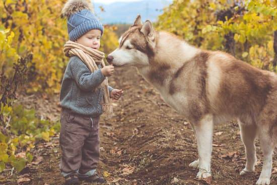 a little boy dressed for colder weather, letting a red and white husky lick his hand, as they are standing in a vineyard