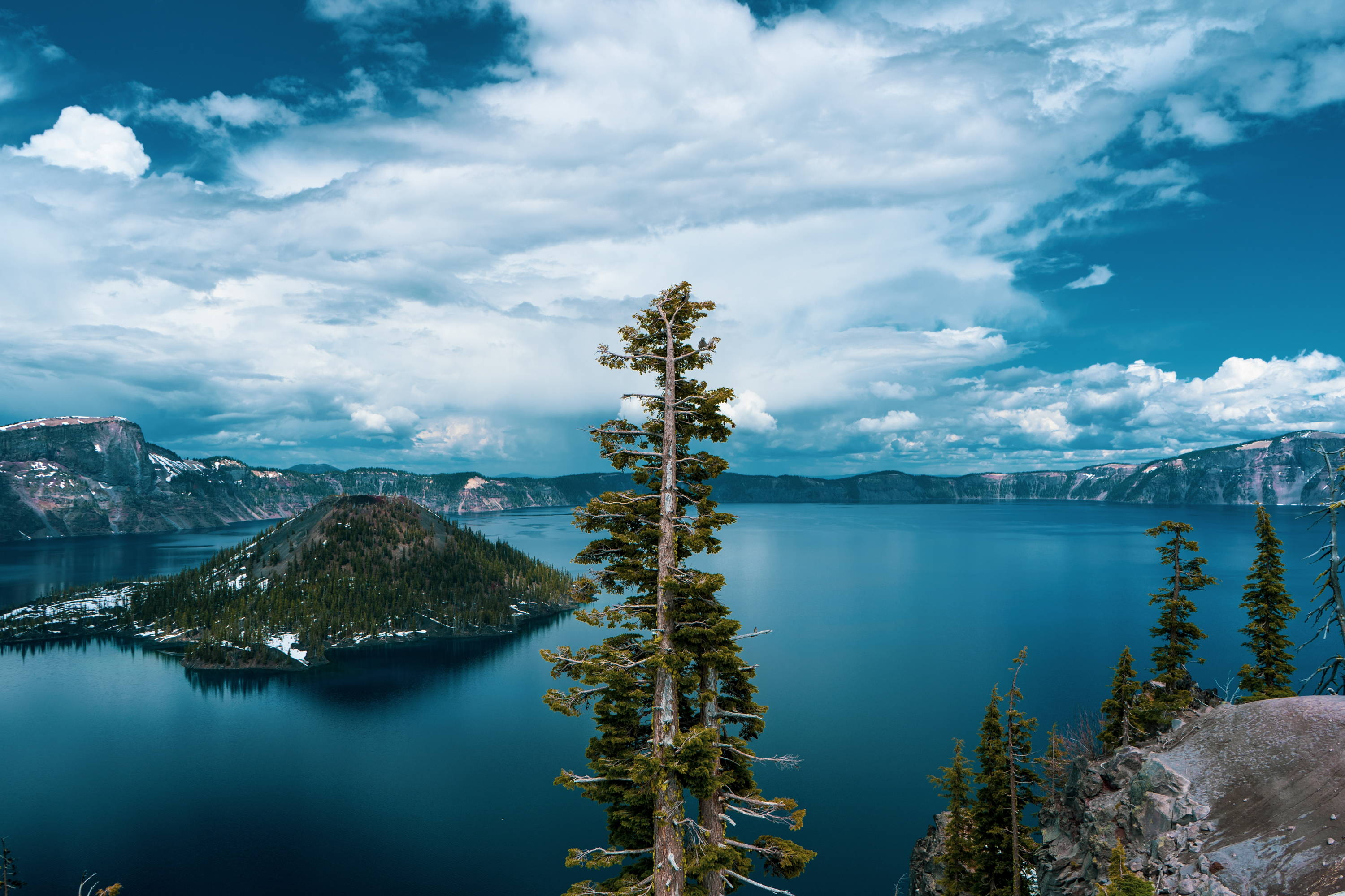 National Parks in Oregon. Lone tree stands in front of large lake with edge of crater all around at Crater Lake National Park.