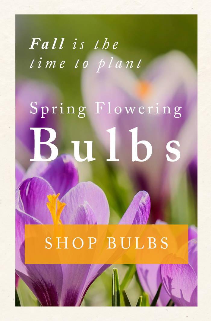 Shop Spring Flowering Bulbs