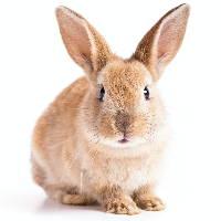 Rabbit Resources