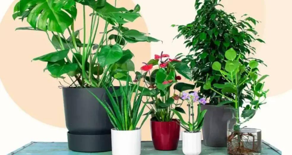 Top 5 easiest plant-pot combination