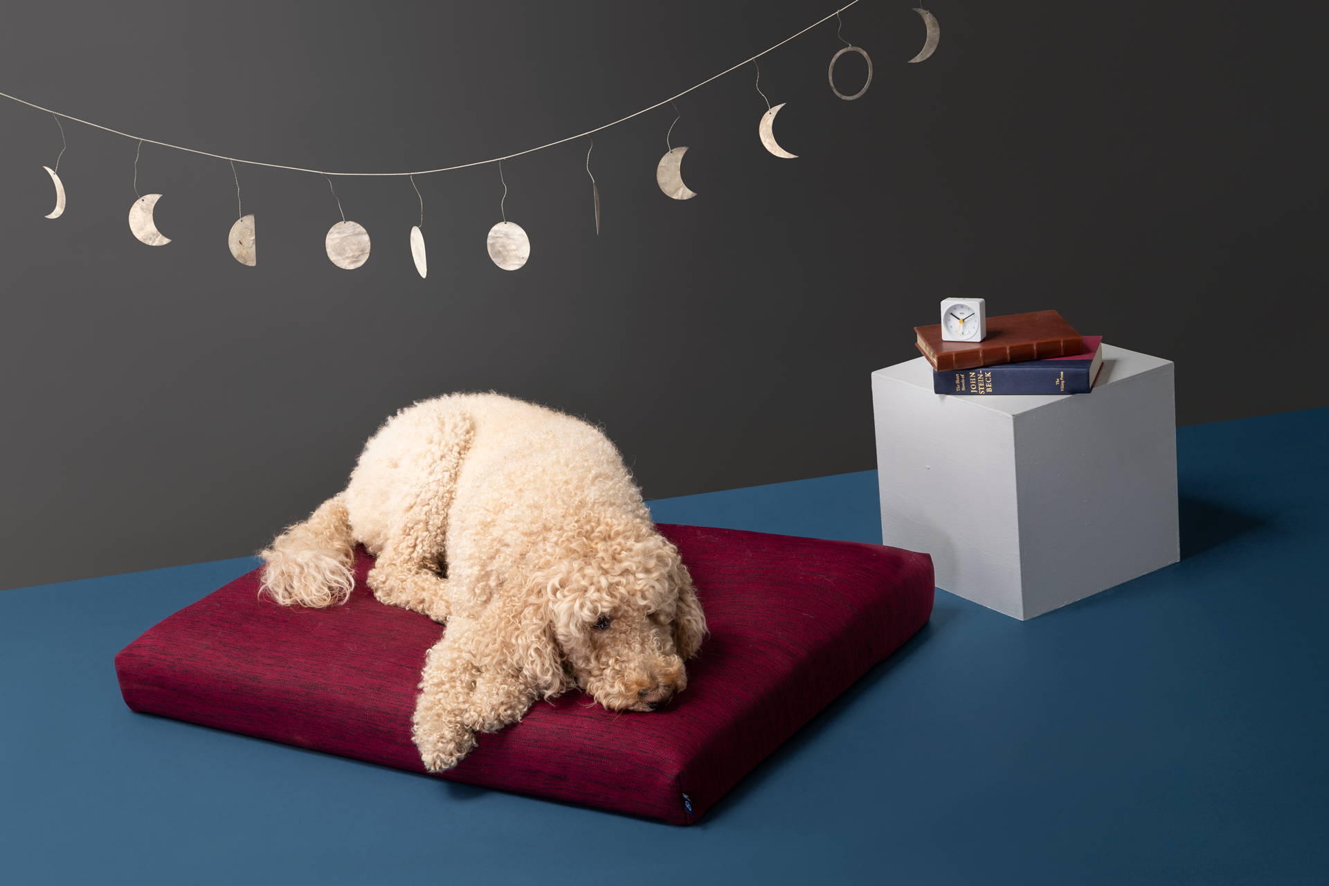 modern pet beds laylo pets
