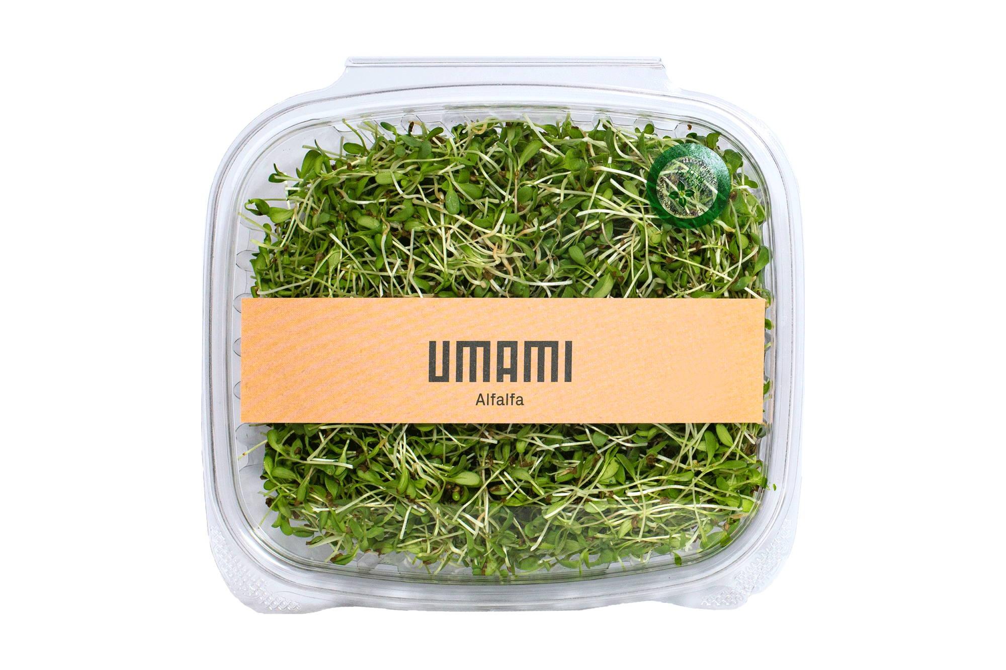 ALFALFA Microgreens. Nährstoffreich.  Für eine ausgewogene Ernährung.