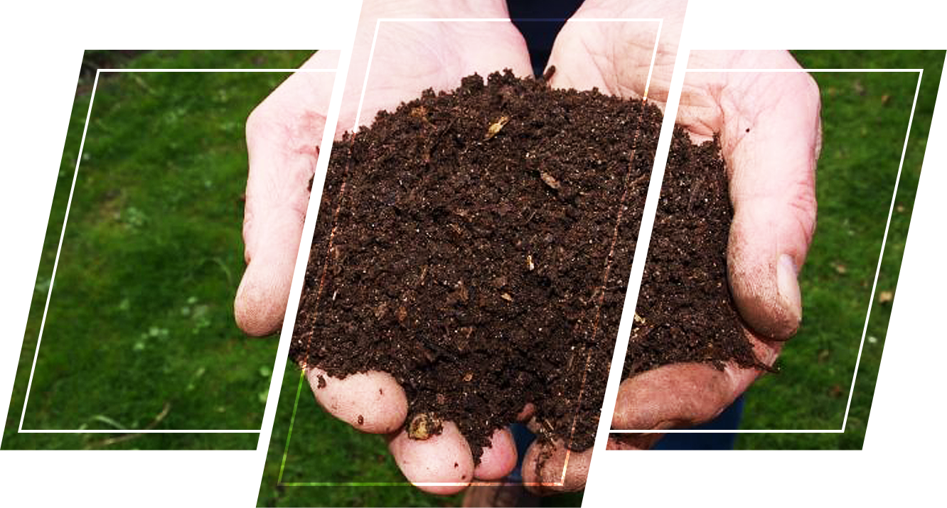 Person holding soil in his hands