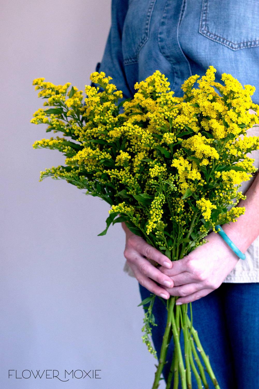 Yellow Solidago Flower