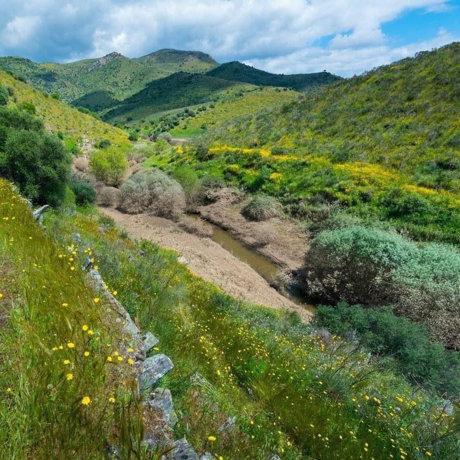 Rolling green hills that make up the coa valley