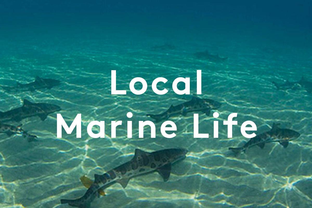 Local Marine Life in La Jolla