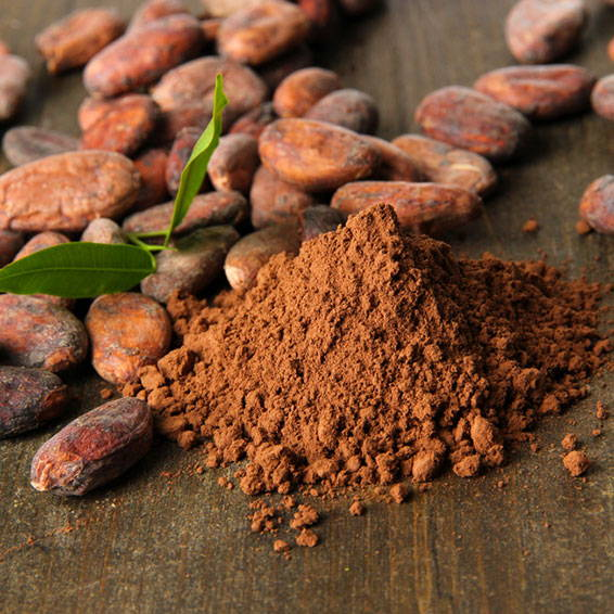 Cocoa Extract Powder