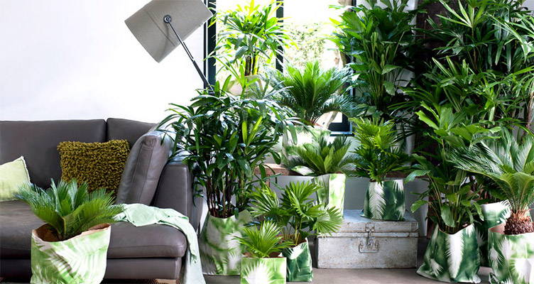 Top 10 Plantes d'intérieur à l'extérieur
