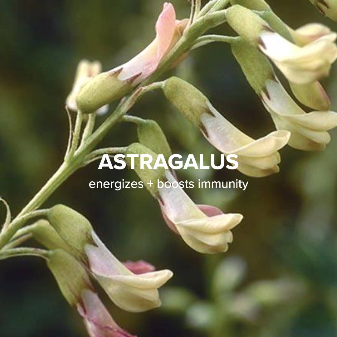 Astragalus benefits for skin & body