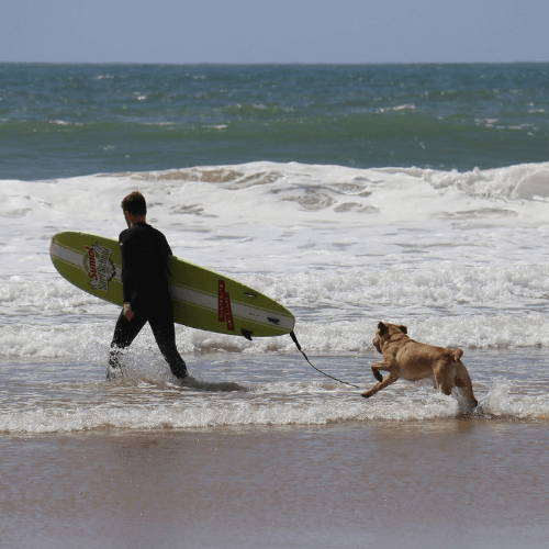 Teach your Dog How To Surf