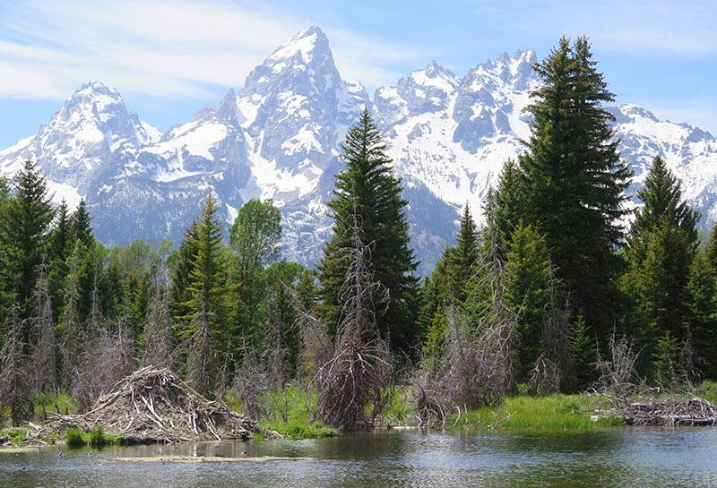 Grand Tetons National Park Travel