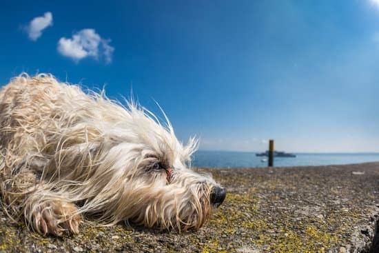A tired dog lays on the ground in front of a shore