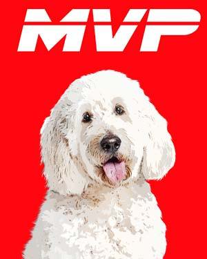 sheep dog mvp