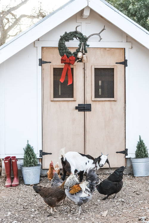 7 7 Ideas for your Holiday Coop